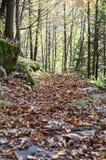 Weg in de herfstbos Stock Foto's
