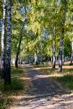Weg in de herfstpark met gele bladeren op grond Stock Afbeelding