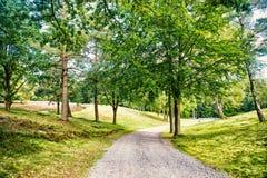 Weg in de lente of de zomerbos, aard Weg in houten landschap, milieu Voetpad onder groene bomen, ecologie stock fotografie