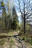 Weg in de schaduw van de de lente bos en mooie boom Stock Afbeeldingen