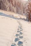 Weg in de sneeuw Stock Foto