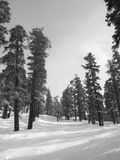 Weg in de sneeuw, de pas van de Das, Yosemite Stock Afbeeldingen