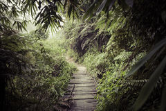 Weg in de wildernis Sinharajaregenwoud in Sri Lanka stock foto's