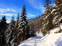 Weg in de winter in bergen royalty-vrije stock afbeeldingen