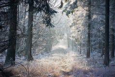 Weg in de winterbos Royalty-vrije Stock Afbeeldingen
