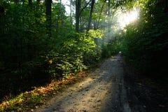 Weg in de zomerbos Stock Afbeeldingen