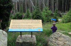 Weg del wandel di Wald fotografie stock libere da diritti