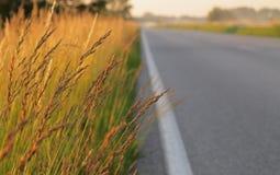 Weg in den Sommerferien - goldene Gräser auf dem Straßenrand Lizenzfreies Stockfoto