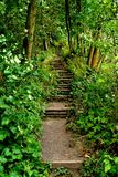 Weg in den Wald Stockfotografie