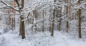 Weg in den Waldschneefällen nachher Lizenzfreies Stockbild