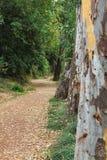 Weg, der in belaubten Wald einsteigt lizenzfreie stockfotos