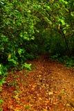 Weg, der in den Wald einsteigt Lizenzfreie Stockbilder