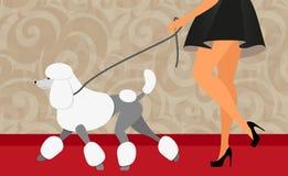 Weg der eleganten Frau mit ihrem Pudel Stockbild