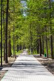 Weg in der Parkgasse unter den Bäumen Lizenzfreies Stockfoto