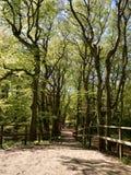 Weg, der unten im Wald führt Lizenzfreie Stockfotografie