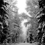 Weg in der Winterwaldkathedrale stockbild