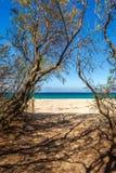 Weg die door bomen tot een zandig strand in Corsica leiden Stock Foto