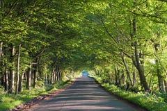 Weg die een tunnel van bomen in de zomer doorneemt stock afbeelding