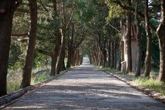 Weg die met bomen wordt gevoerd Royalty-vrije Stock Afbeelding