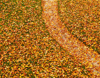 Weg die met de herfstbladeren wordt behandeld royalty-vrije stock afbeelding