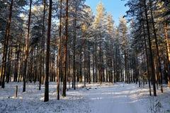 Weg die met sneeuw wordt behandeld Stock Foto