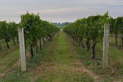 Weg die onderaan wijngaard leiden Stock Foto's