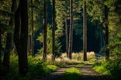 Weg in die Tiefe eines Waldes stockbild