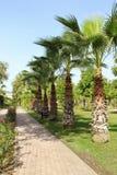 Weg die tot de horizon op een hete middag leiden palmen langs de betegelde weg Het ontwerp van het landschap royalty-vrije stock afbeeldingen