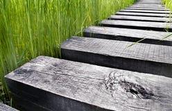 Weg die van hout over water op een gebied wordt gemaakt Royalty-vrije Stock Foto