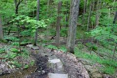 Weg in die Waldtiefe lizenzfreie stockfotos