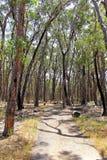 Weg door Australisch regenwoud Royalty-vrije Stock Afbeeldingen