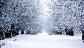 Weg door bevroren bos met sneeuw Stock Fotografie