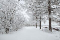 Weg door bevroren bos met sneeuw Stock Foto