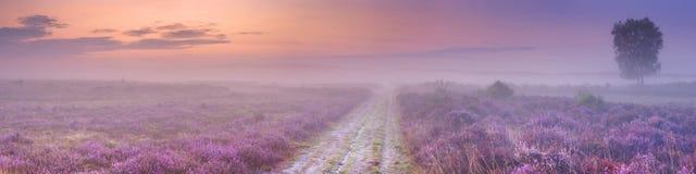 Weg door bloeiende heide in Nederland royalty-vrije stock foto