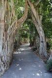 Weg door bomen, Marie Selby Botanical Gardens, Sarasota, Florida stock foto's