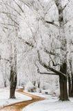 Weg door bomen met vorst stock foto's
