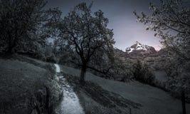 Weg door boomgaarden in de avond Stock Afbeelding