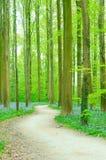 Weg door bos Stock Afbeelding