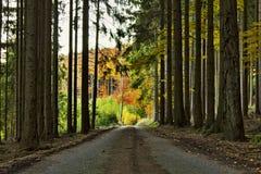 Weg door bos Stock Fotografie