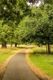Weg door bos in de recente zomer, Ierland stock fotografie