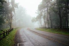 Weg door bos met mist en nevelig royalty-vrije stock foto