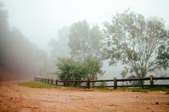 Weg door bos met mist en nevelig stock foto