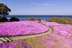 Weg door de bloemen Stock Foto