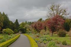 Weg door de botanische tuinen van Dublin in de lente stock foto's