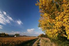 Weg door de herfst stock foto