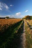 Weg door de herfst stock afbeelding