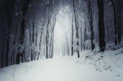 Weg door de winter royalty-vrije stock foto