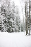 Weg door de winterbos royalty-vrije stock afbeelding