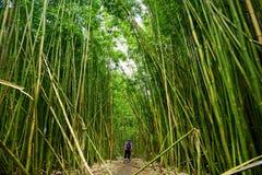 Weg door dicht bamboebos, die tot beroemde Waimoku-Dalingen leiden Populaire Pipiwai-sleep in het Nationale Park van Haleakala op Royalty-vrije Stock Afbeelding