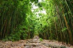 Weg door dicht bamboebos, die tot beroemde Waimoku-Dalingen leiden Populaire Pipiwai-sleep in het Nationale Park van Haleakala op Stock Afbeelding